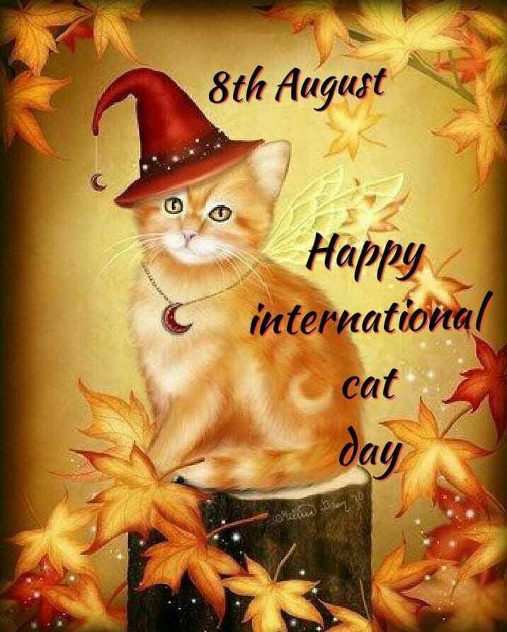 🐱 આંતરરાષ્ટ્રીય બિલાડી દિવસ - 8th August Happy international cat day - ShareChat