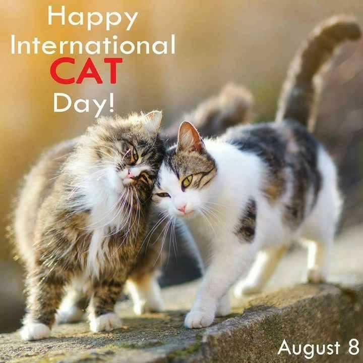 🐱 આંતરરાષ્ટ્રીય બિલાડી દિવસ - Happy International CAT Day ! August 8 - ShareChat