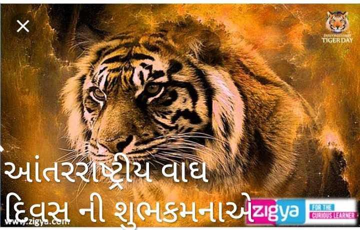 🐯 આંતરરાષ્ટ્રીય વાઘ દિવસ - Then i wiી TIGER DAY આંતરરાષ્ટ્રીય વાઘ દિવસ ની શુભકમનાએzigya | Harsh - ShareChat