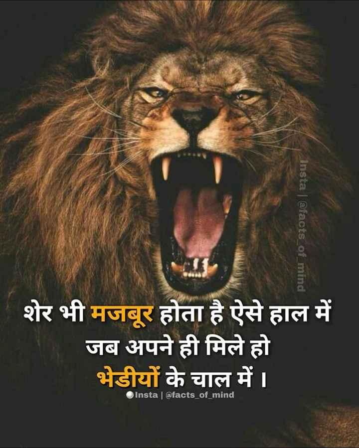 😈 એટિટ્યુડ સ્ટેટ્સ - Insta @ facts _ of _ mind शेर भी मजबूर होता है ऐसे हाल में जब अपने ही मिले हो भेडीयों के चाल में । Insta @ facts _ of _ mind - ShareChat