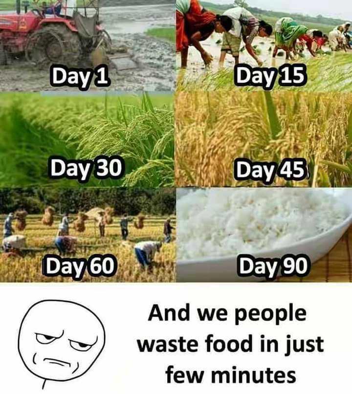 🌾 કિસાન દિવસ - mbaya Day 1 Day 15 Day 30 Day 45 Day 60 Day 90 And we people waste food in just few minutes - ShareChat