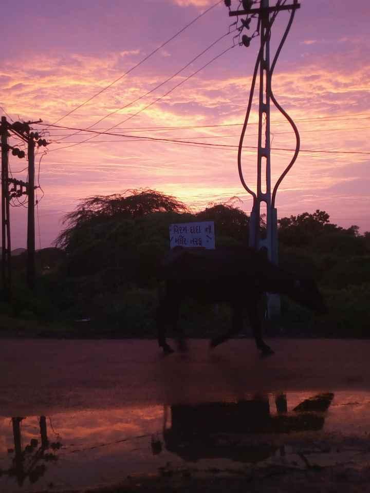🍱 ચોમાસા ની વાનગી - # ર્થિરમ દાદા ની / મૌર , ત૨૬ - ShareChat