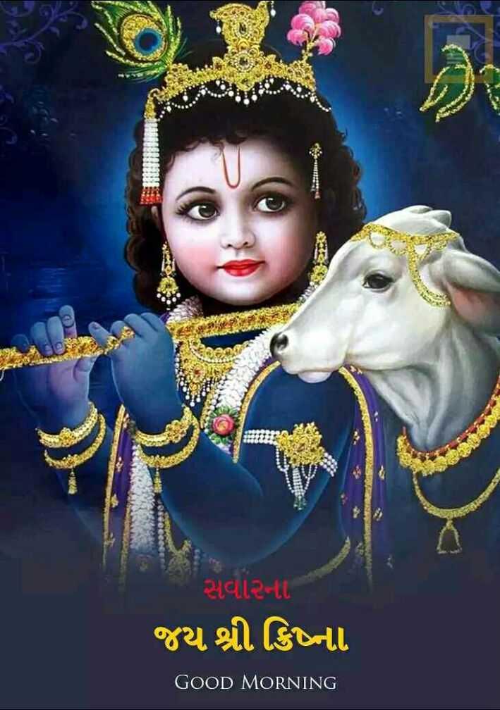 🙏 જય શ્રી કૃષ્ણ - સવાર - LL જય શ્રી ક્રિષ્ના GOOD MORNING - ShareChat
