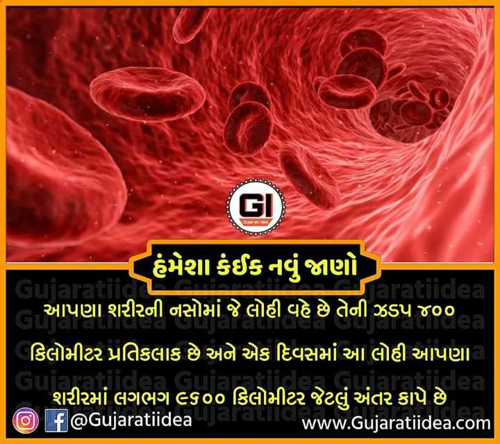 🔍 જાણવા જેવું - હંમેશા કંઈક નવું જાણો Gujaratiid aratiidea ( આપણા શરીરની નસોમાં જે લોહી વહે છે તેની ઝડપ ૪૦૦ | કિલોમીટર પ્રતિકલાક છે અને એક દિવસમાં આ લોહી આપણા Gujai lea ' શરીરમાં લગભગ ૯૬૦૦ કિલોમીટર જેટલું અંતર કાપે છે , O f @ Gujaratiidea da Www . Gujaratiidea . com - ShareChat