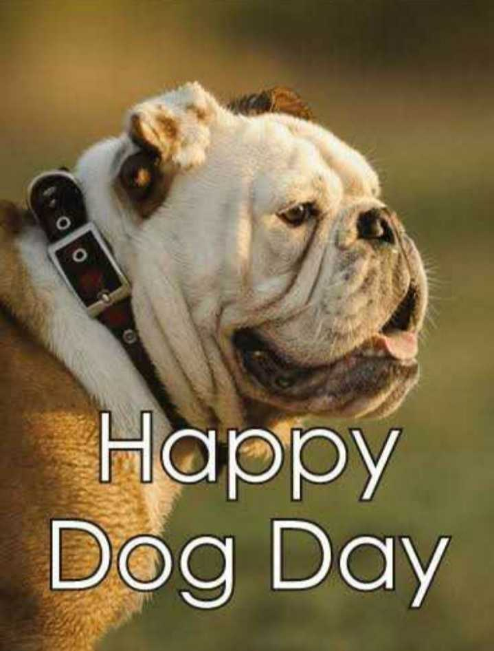 🐶 ડૉગ દિવસ - Happy Dog Day - ShareChat