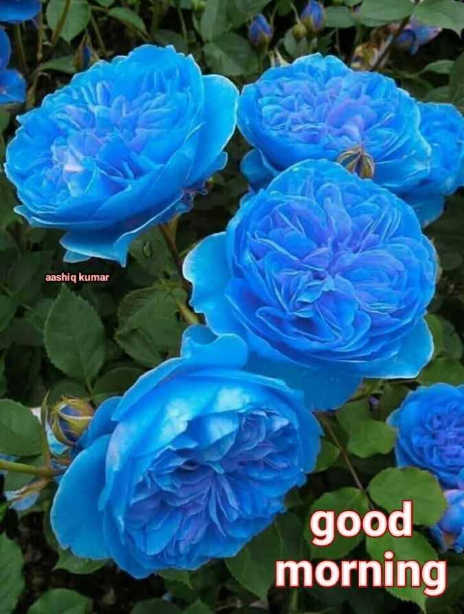 🎉 તહેવારો - aashiq kumar good morning - ShareChat