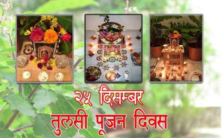 🌿 તુલસી પુજન દિવસ 🙏 - 0 . 0 . 0 २५ दिसम्बर तुलसी पूजन दिवस - ShareChat