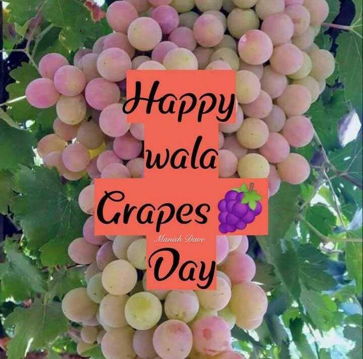 🍇 દ્રાક્ષ દિવસ - Happy co wala Grapes Manish Dave Day - ShareChat