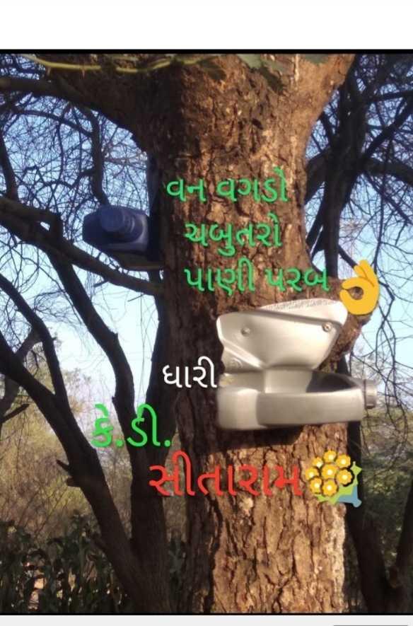 પશુ - પંખી - વનવગડા અબુરી પાણી રબા ધારી ડી . - ShareChat