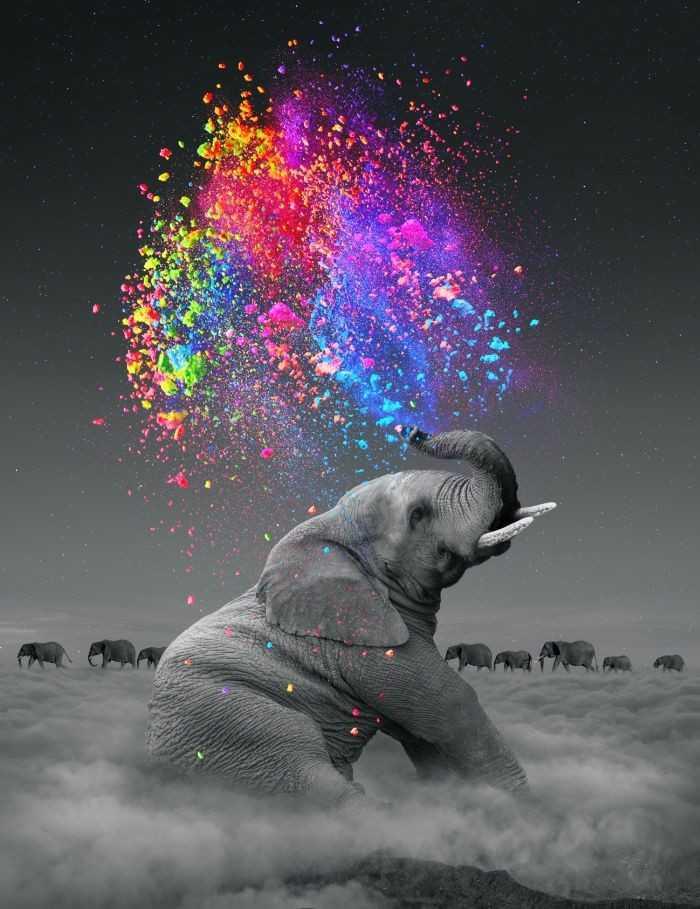 🐶 પાલતું પ્રાણી ફોટોગ્રાફી - ShareChat