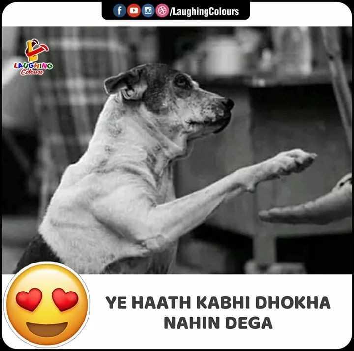 🐶 પાલતું પ્રાણી ફોટોગ્રાફી - foo / Laughing Colours LAUGNING Colours YE HAATH KABHI DHOKHA NAHIN DEGA - ShareChat