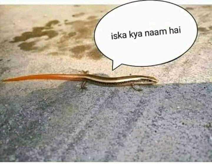 પ્રાણી જગત - iska kya naam hai - ShareChat