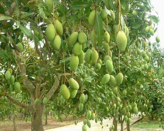 🍎 ફળો & ડ્રાયફ્રૂટ - ShareChat