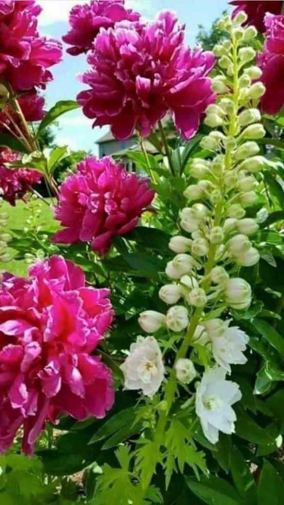 💐 ફૂલની ફોટોગ્રાફી - ShareChat