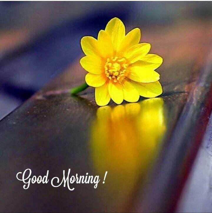 📸 ફોટોગ્રાફી - Good Morning ! - ShareChat