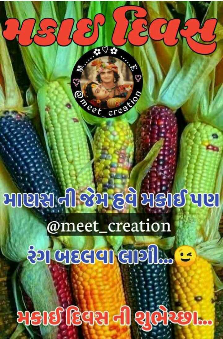 🌽 મકાઈ દિવસ - @ me eet CV eation Tણીની જાહgફાઈ પણ @ meet _ creation ગાલાવાલાથી ક @ાડિયાસાનીથી છે - ShareChat