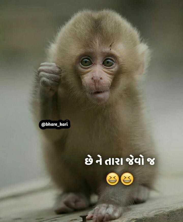 🤣 રમુજી ફોટો - @ bhare _ kari છે ને તારા જેવો જ - ShareChat