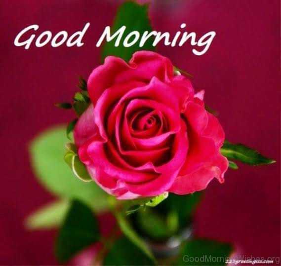 લવ ફોટો - Good Morning GoodMomizaservitinnescarg - ShareChat