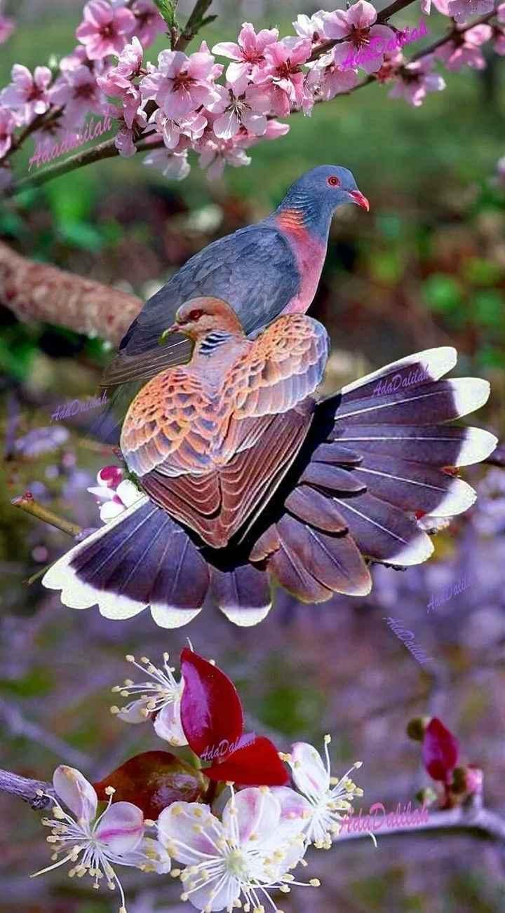 🐧 વન્યજીવન ફોટોગ્રાફી 🐇 - madalad - ShareChat