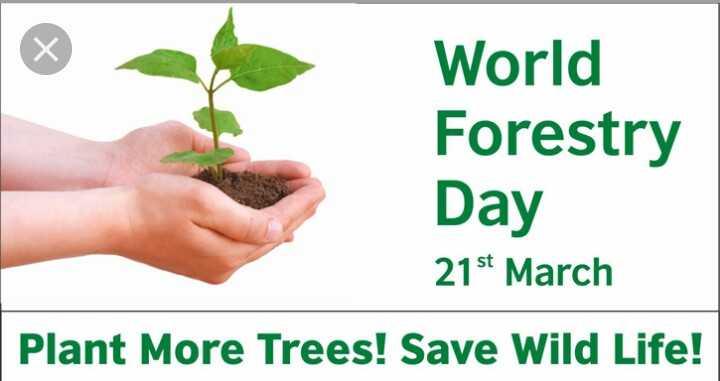 🦁 વિશ્વ વન દિવસ - World Forestry Day 21st March Plant More Trees ! Save Wild Life ! - ShareChat