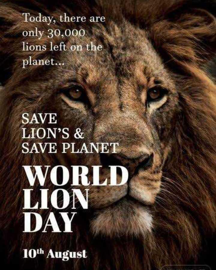 🦁 વિશ્વ સિંહ દિવસ - Today , there are only 30 , 000 lions left on the planet . . SAVE LION ' S & SAVE PLANET WORLD LION DAY 10th August - ShareChat