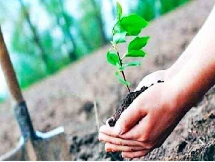 🌲 વૃક્ષો વાવો અભિયાન - ShareChat