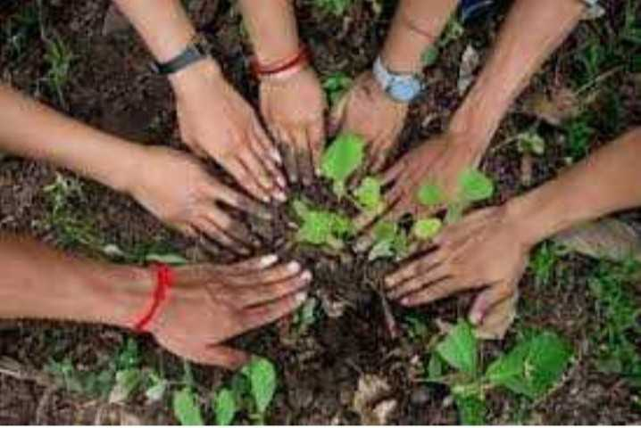 🌳 વૃક્ષો વાવો અભિયાન - ShareChat