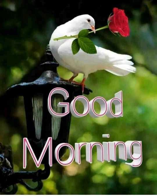 😊 શુભકામનાઓ - Good - Morning - ShareChat