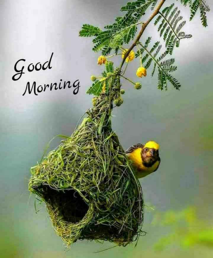💐 શુભ બુધવાર - Good Morning 6 . de READ W - ShareChat