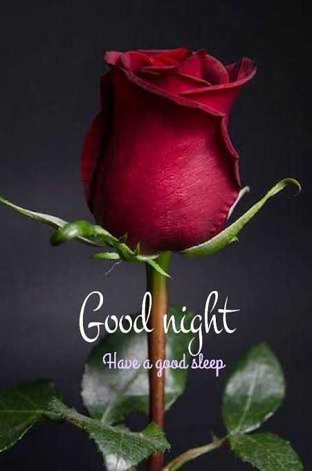 🌙 શુભ રાત્રી - Good night Have a good sleep - ShareChat