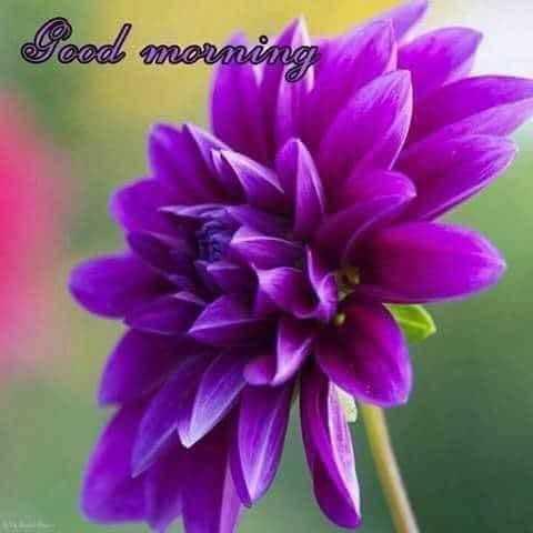 💐 શુભ શુક્રવાર - Good morning - ShareChat
