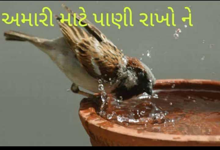 🙏 શેરચેટ જીવદયા અભિયાન - અમારી માટે પાણી રાખો ને - ShareChat