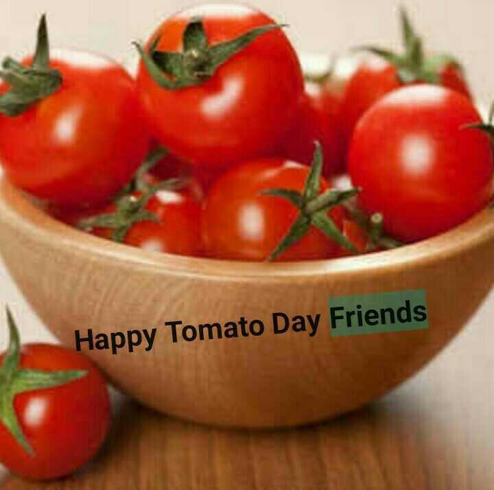 🍅 શેરચેટ ટામેટાં દિવસ - Happy Tomato Day Friends - ShareChat