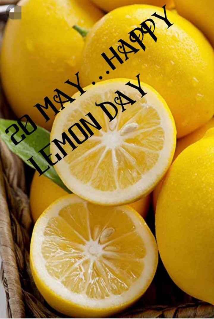 🍋 શેરચેટ લીંબુ દિવસ - ай MAY . . . HAPPY LEMON DAY - ShareChat