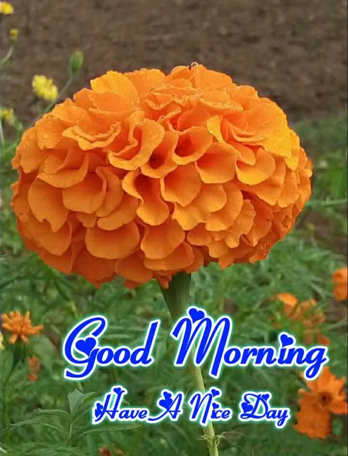 🙏 શ્રદ્ધાંજલિ - Good Morning Mae No Dar - ShareChat