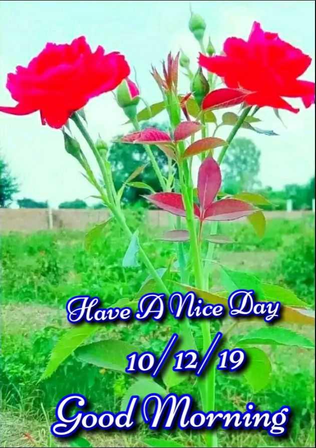 🙏 શ્રદ્ધાંજલિ - Have A Nice Day 10 / 12 19 Good Morning - ShareChat