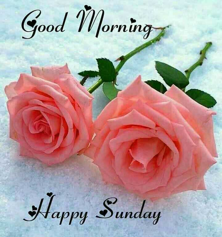 🙏 શ્રદ્ધાંજલિ 💐 - Good ÎNorning Happy Sunday - ShareChat