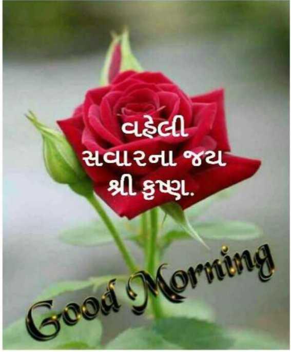 🌅 સુપ્રભાત 🙏 - વહેલી સવારના જય શ્રી કૃષ્ણ . Good Morning - ShareChat