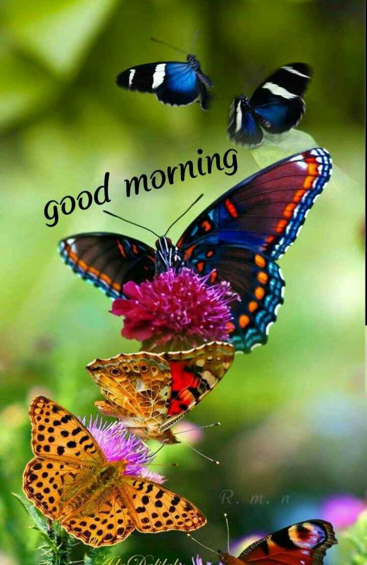🌅 સુપ્રભાત 🙏 - good morning R . m . n MLAMA - ShareChat