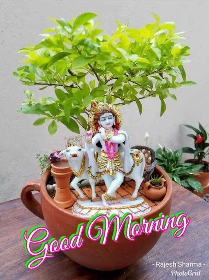 🌅 સુપ્રભાત 🙏 - Geod Morning - Rajesh Sharma PhotoGrid - ShareChat