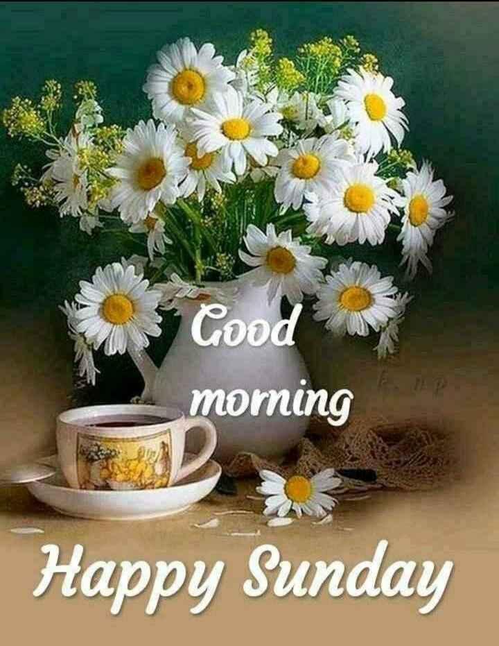 🙏સુ-પ્રભાત🙏# - Cood morning Happy Sunday - ShareChat