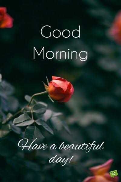 🌅 સુપ્રભાત - Good Morning Have a beautiful day ! - ShareChat