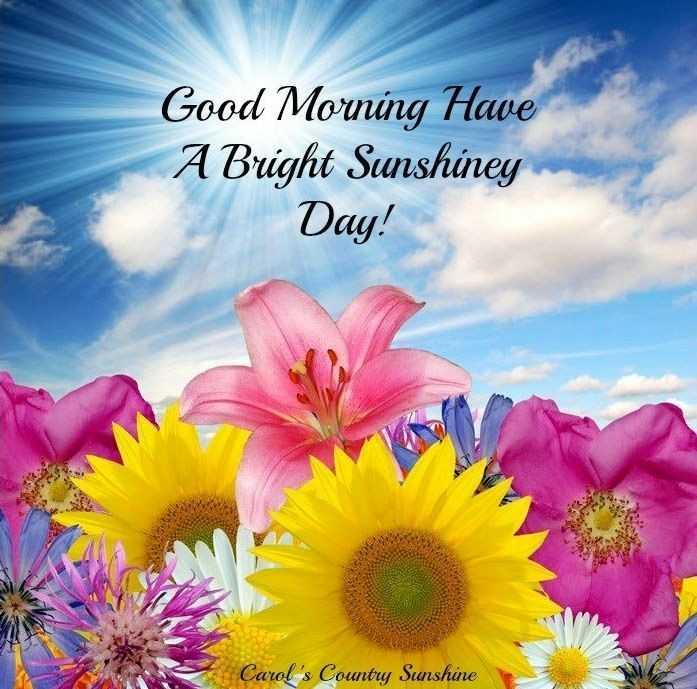 🌅 સુપ્રભાત 🙏 - Good Morning Have A Bright Sunshiney Day ! Carol ' s County Sunshine - ShareChat