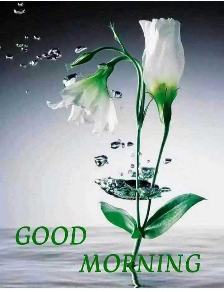 🌅 સુપ્રભાત 🙏 - 13 GOOD MORNING - ShareChat