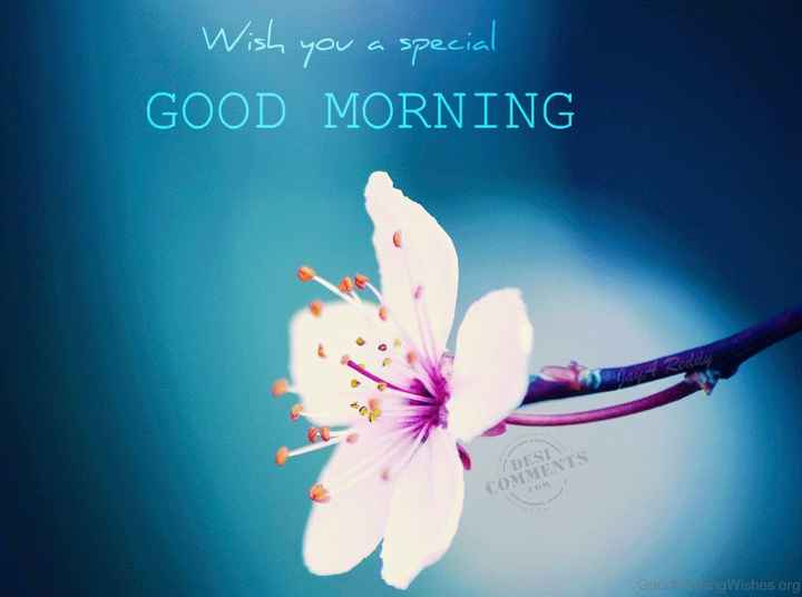 🌅 સુપ્રભાત 🙏 - Wish you a special GOOD MORNING GoodangWishes . org - ShareChat