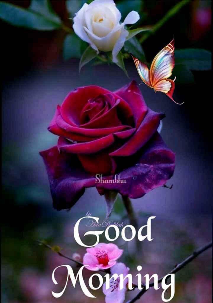 🌅 સુપ્રભાત 🙏 - Shambhu Good Morning - ShareChat