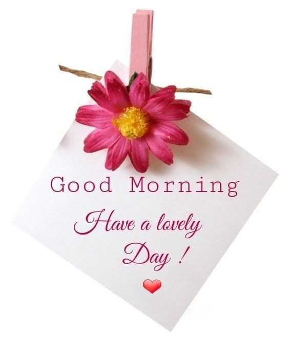 🌅 સુપ્રભાત 🙏 - Good Morning Have a lovely Day - ShareChat