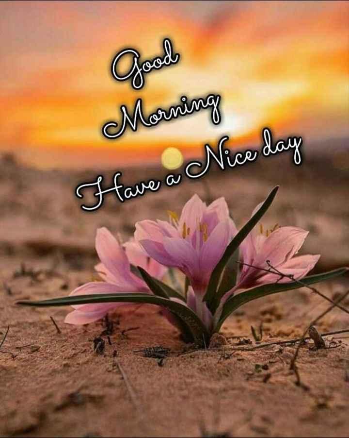 🌅 સુપ્રભાત - Morning Have a Nice day - ShareChat