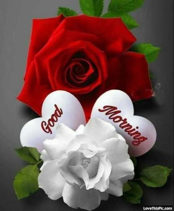 🌅 સુપ્રભાત - Morning Good LoveThisPic . com - ShareChat