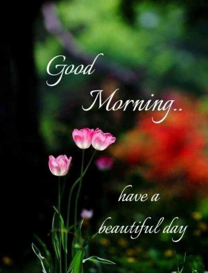 🌅 સુપ્રભાત 🙏 - Good Morning . have a ( beautiful day - ShareChat